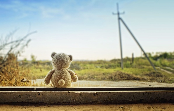 Picture the sky, nature, background, widescreen, Wallpaper, mood, toy, plants, bear, bear, wallpaper, widescreen, background, full …