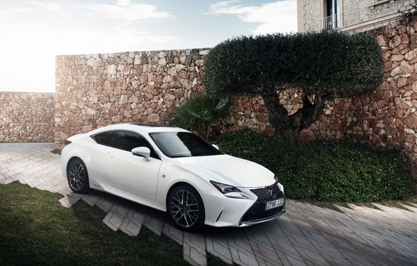 Picture white, Lexus, Lexus, F-Sport