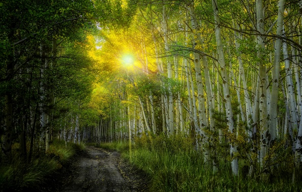 Picture road, autumn, forest, leaves, the sun, rays, trees, sunset, nature, colors, colorful, birch, forest, road, …