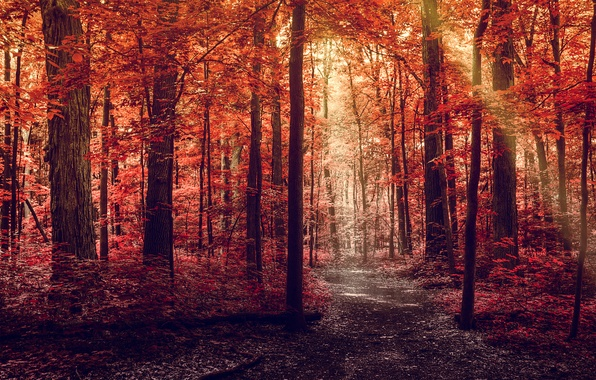 Picture road, autumn, forest, leaves, rays, light, trees, nature, red, path, crimson