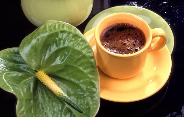 Picture flower, coffee, Cup, Anthurium