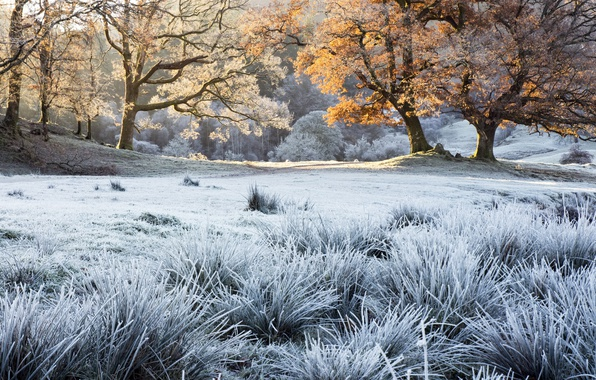 Picture frost, autumn, grass