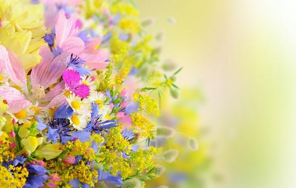 Picture summer, flowers, bouquet, daisies, drops, petals