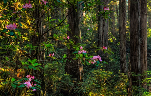Picture greens, forest, summer, trees, flowers, the bushes, rhododendron