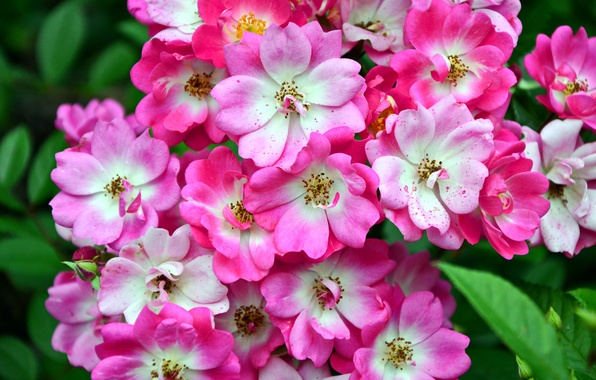 Picture photo, Flowers, Closeup, Flowering trees