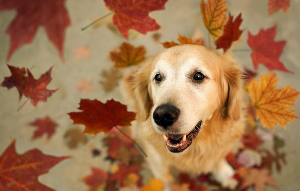 Picture leaves, each, dog