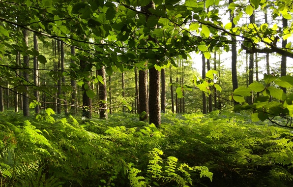 Picture greens, forest, leaves, trees, branches, fern