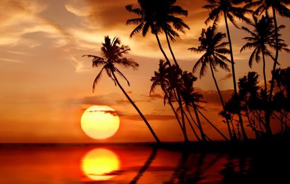 Picture sea, beach, the sun, sunset, tropics, palm trees, beach, sea, sunset, paradise, palms, tropical