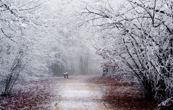Picture winter, frost, road, snow, trees, bench, branches, nature, Park, shop, track, shop, bench