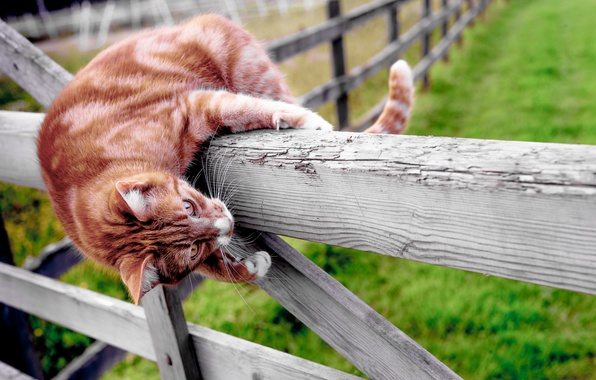 Picture cat, mood, the fence, Kote