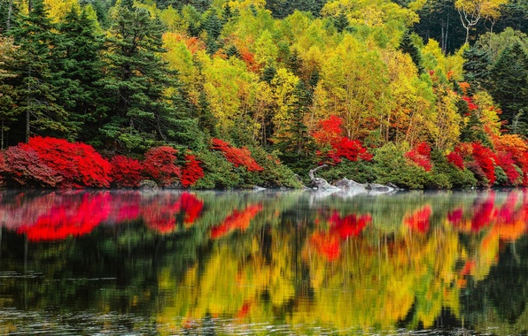 Picture autumn, trees, landscape, nature, lake, forest