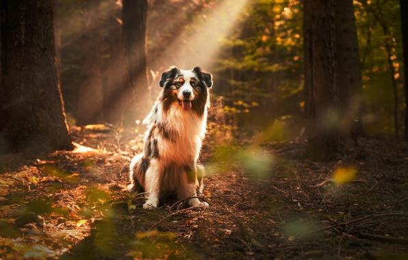 Picture autumn, forest, look, each, dog