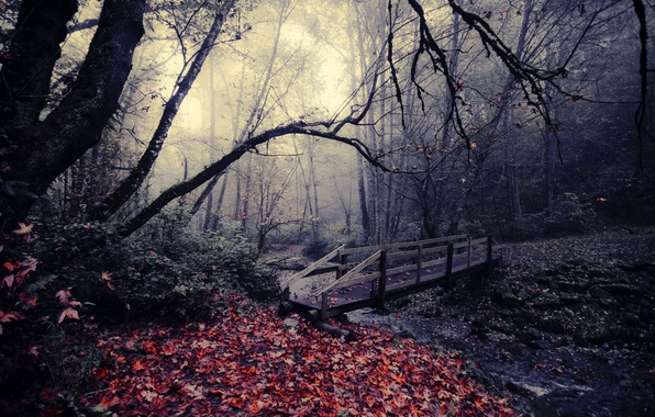 Picture autumn, leaves, bridge, nature, Park