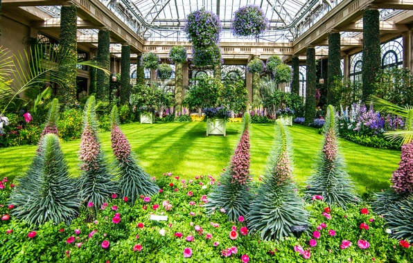 Picture nature, Park, photo, lawn, roses, USA, the bushes, delphinium, Longwood Kennett Square