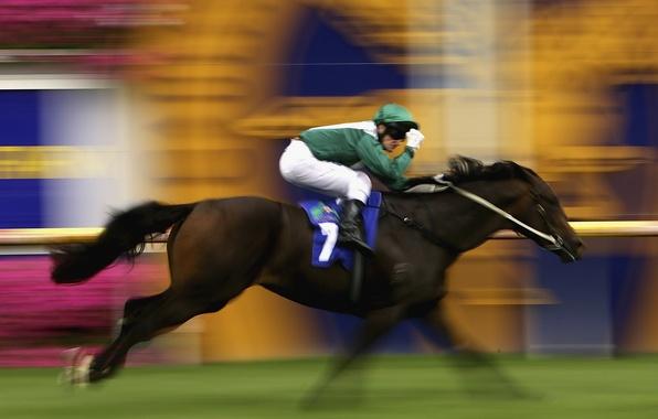 Picture horse, sport, speed, running, rider