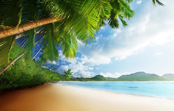 Picture sand, sea, beach, the sky, the sun, tropics, palm trees, the ocean, shore, summer, sunshine, …