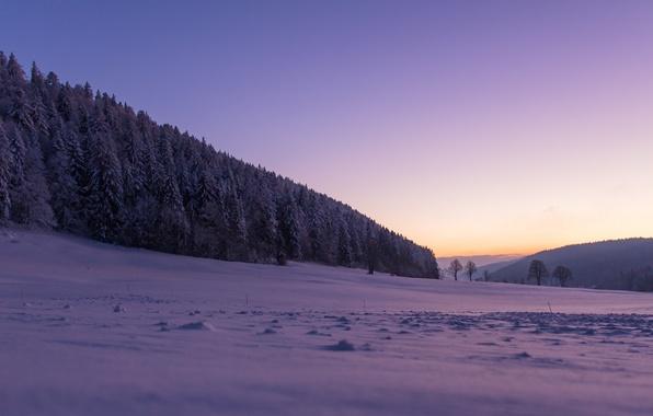 Picture winter, forest, snow, trees, Switzerland, Switzerland, La San, The Sagne, La Chaux-de-Fonds, La Chaux-de-Fonds