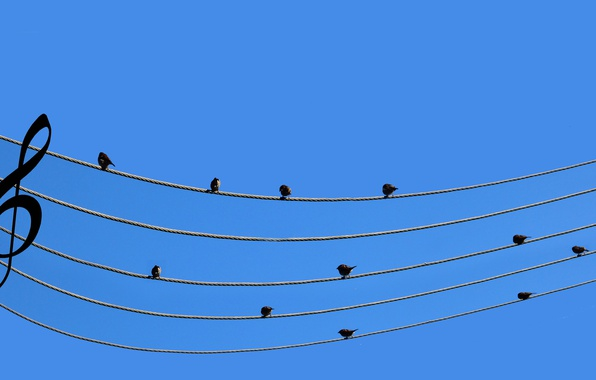 Picture notes, music, wire, Sparrows