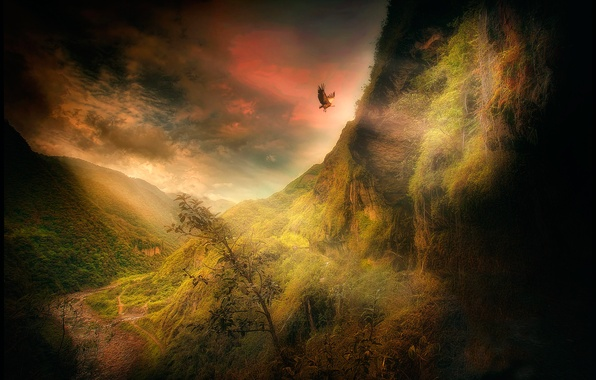 Photo wallpaper treatment, The Condor of the Andes, mountains, bird