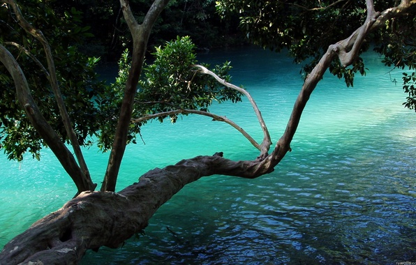 Picture leaves, water, branches, nature, tree, plant