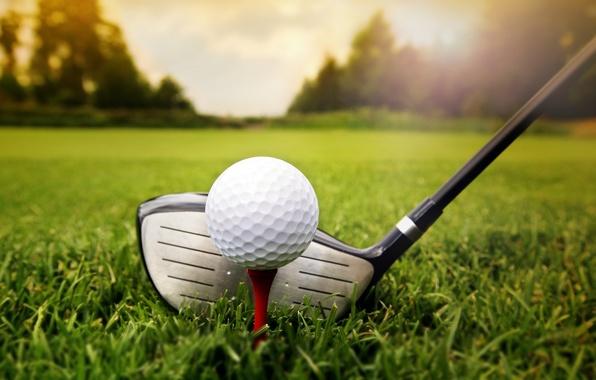 Picture grass, golf, ball