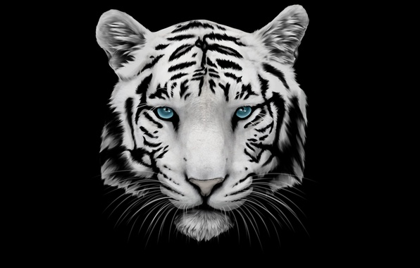 Picture white, mustache, face, tiger, head, tiger