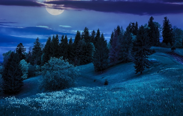 Picture trees, night, nature, hills, the moon, nature, night, the hills, the moon, the trees