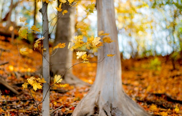 Picture autumn, forest, leaves, trees, branches, nature, yellow, leaves