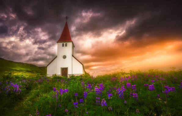 Picture sunset, flowers, meadow, Church, Iceland, Iceland, lupins, Vic, Vik in Myrdal