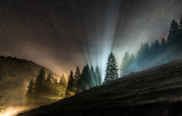 Picture forest, light, night, nature