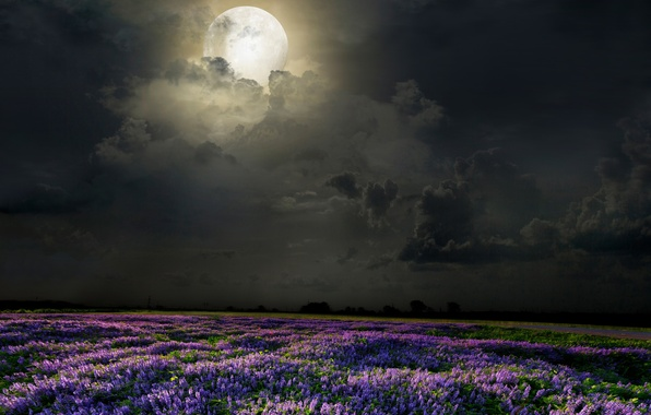 Picture field, flowers, night, the moon, lavender