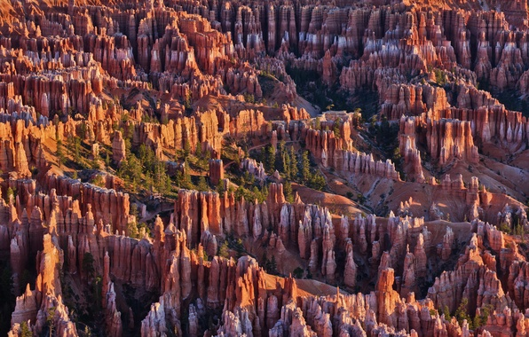 Picture trees, mountains, rocks, Utah, USA, Bryce Canyon National Park