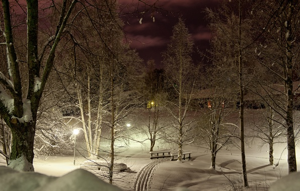 Picture winter, light, snow, trees, night, lights, Park, trails