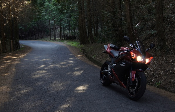 Picture road, forest, red, motorcycle, red, yamaha, bike, Yamaha, yzf-r1
