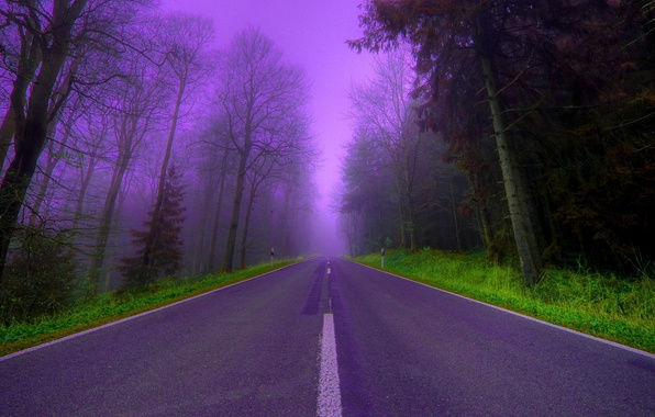 Picture road, trees, fog, lilac, the evening, Forest, beautiful