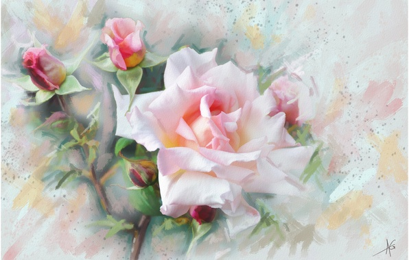 Picture flower, flowers, pink, graphics, Rose, painting, gently, pastel colors, Wallpaper from lolita777