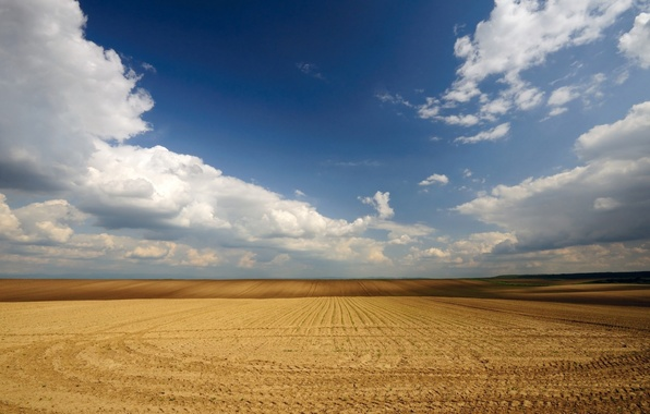 Picture wheat, field, the sky, clouds, Serbia