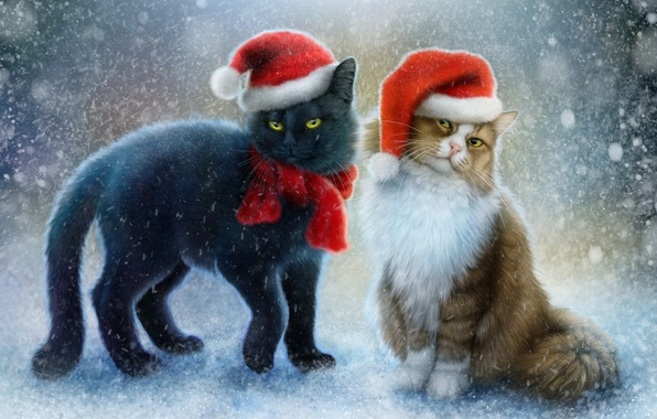 Picture snow, cats, scarf, beanie