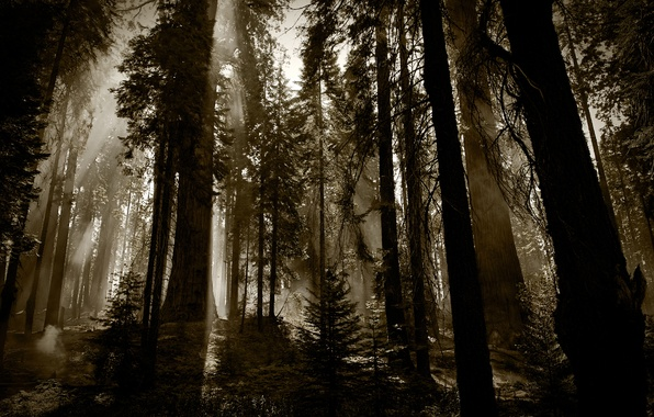 Picture forest, trees, dark