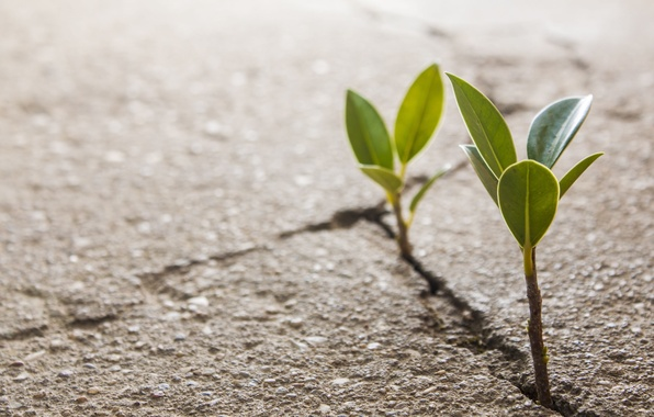 Picture asphalt, macro, background, earth, widescreen, Wallpaper, plant, Rostock, leaf, wallpaper, leaves, widescreen, background, crack, full ...