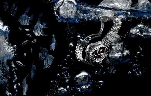 Picture water, fish, Watch, Omega, Seamaster, 1200M, Ploprof, Angelfish