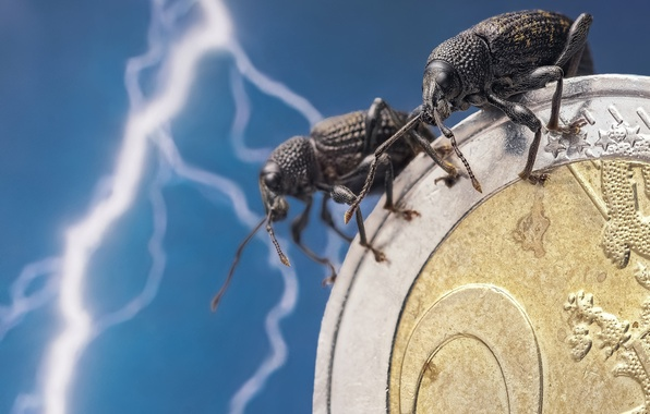 Picture macro, insects, lightning, bugs, Euro, a couple, coin, money, Skosarev a single, Weevils