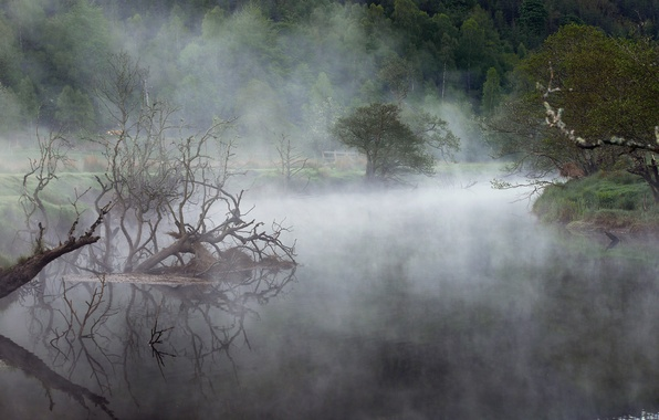 Picture forest, fog, lake