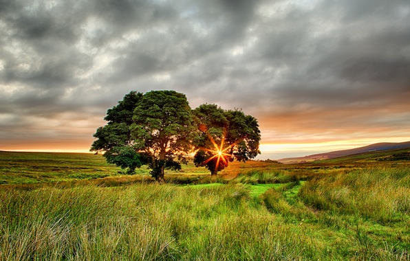 Picture field, summer, the sun, rays, trees, sunset, Ireland, two