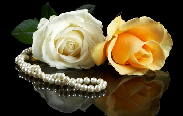 Picture white, flowers, yellow, background, black, roses, pearl, a couple