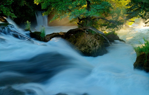 Picture forest, summer, light, nature, river, stream