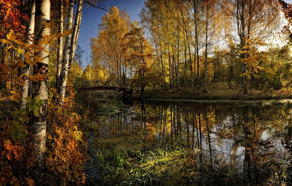 Picture autumn, forest, trees, bridge, yellow, river