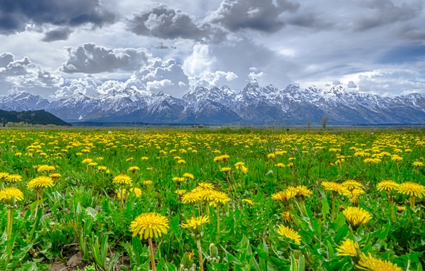 Picture snow, flowers, mountains, clouds, dandelion, meadow