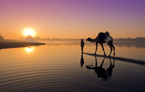 Picture landscape, sunset, river, camel
