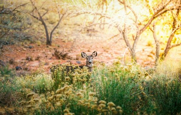 Picture trees, Bush, deer
